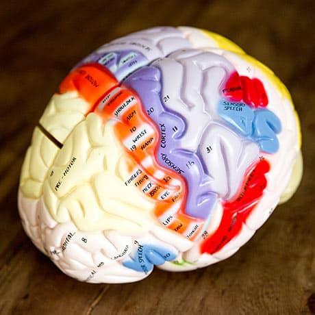 group workshop frameworks based in neuroscience