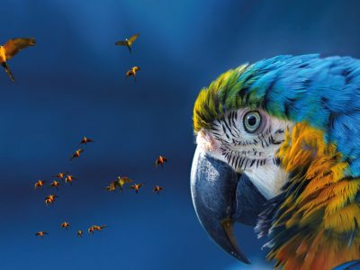 Coaching with the Brain in mind event Macaw parrot picture